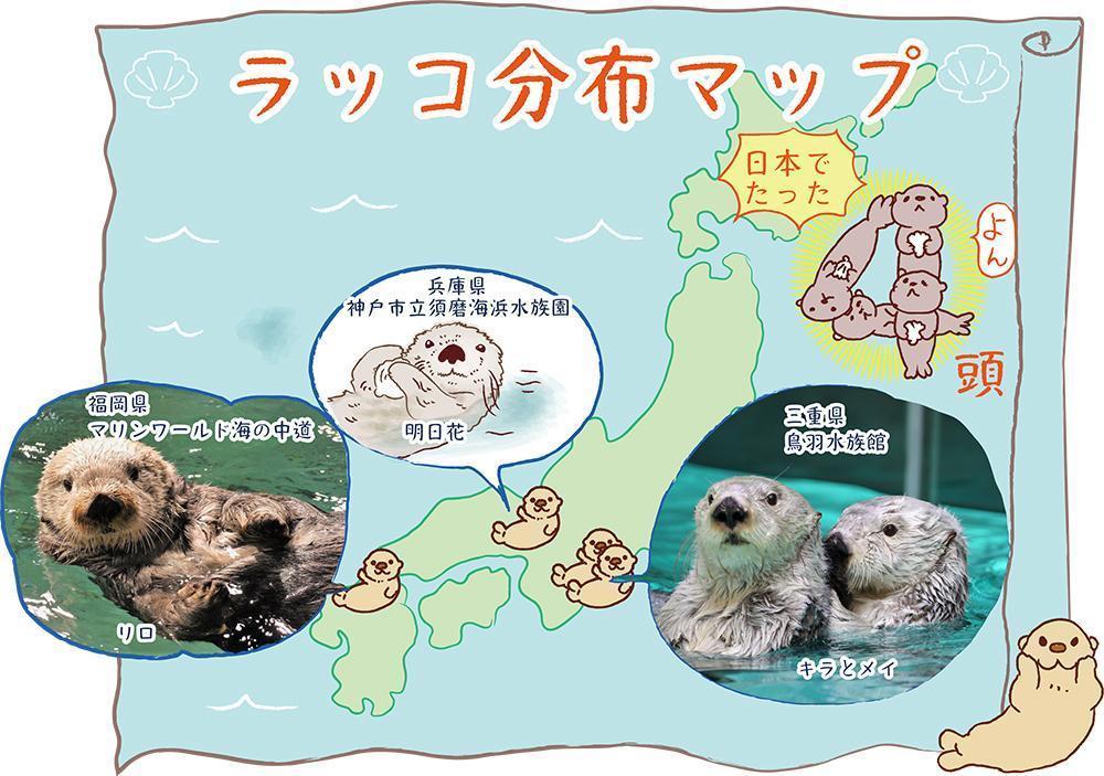 アイキャッチ:【2021年6月最新】日本にいるラッコは4頭だけ!?いなくな …