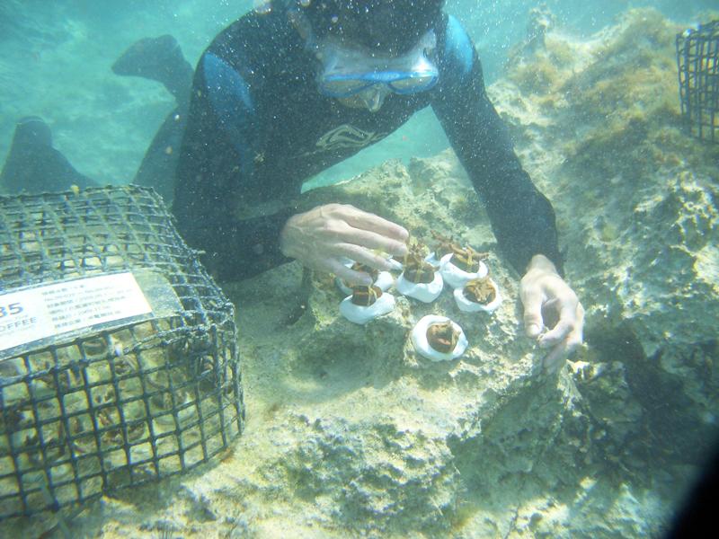 アイキャッチ:コーヒーで沖縄の海を救う35COFFEEの挑戦