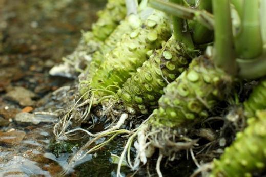 アイキャッチ:カメヤ食品、豊かな水で育つわさびを使った製品づくりへのこだわ …