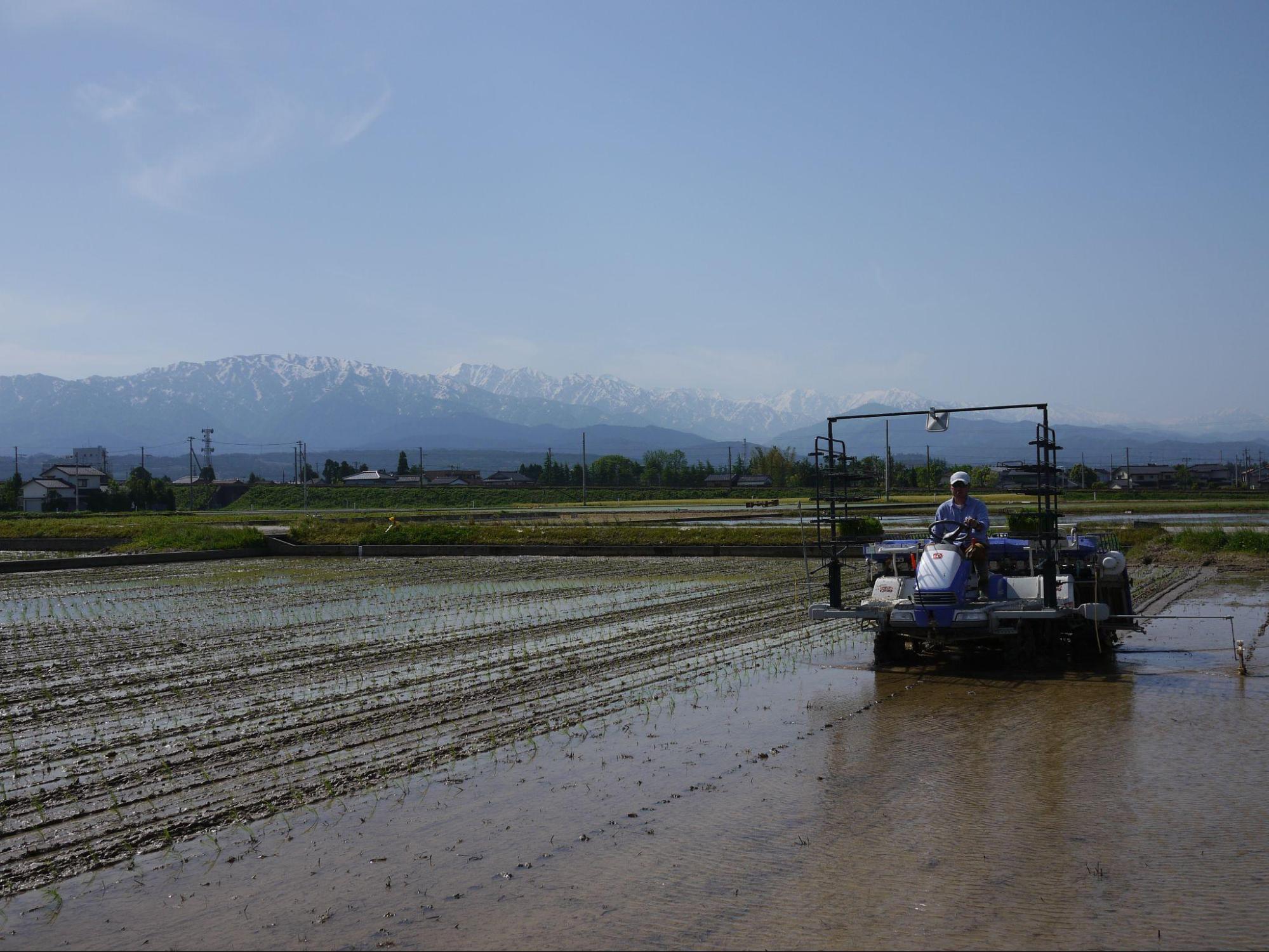 アイキャッチ:黒部川の扇状地に位置する濱田ファームの田植えへのこだわり