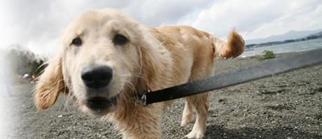愛犬のイメージ画像
