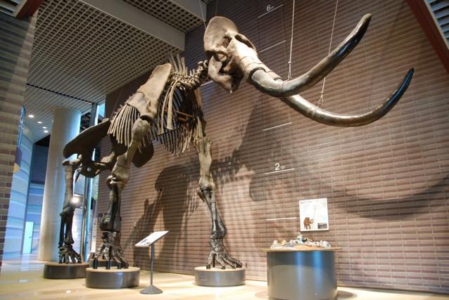 アイキャッチ:自然との共生を学ぶことができる、ミュージアムパーク茨城県自然 …