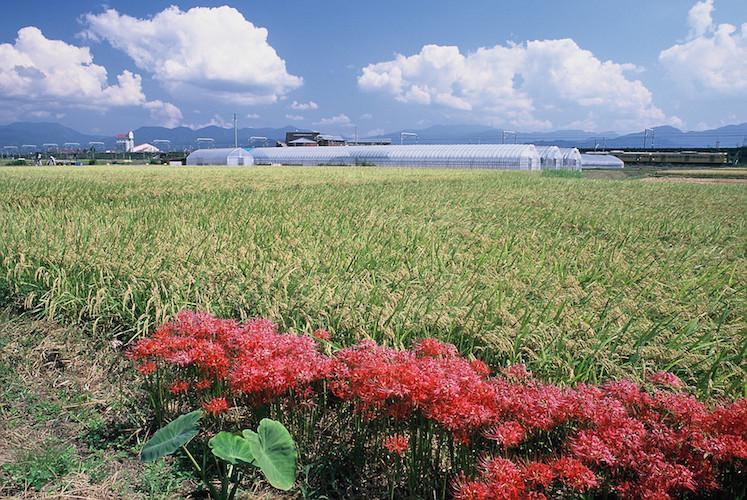 吉田地区に広がるのどかな田園風景